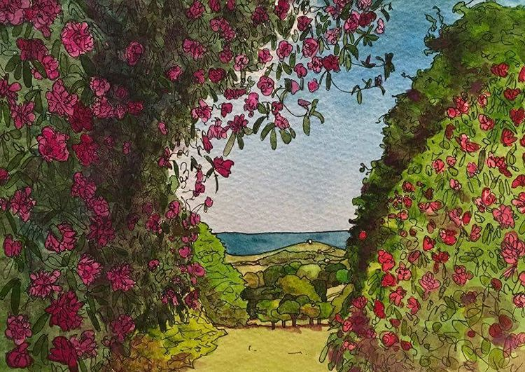 rhododendrons at sheringham Norfolk pen and watercolour Prints available fromhellip
