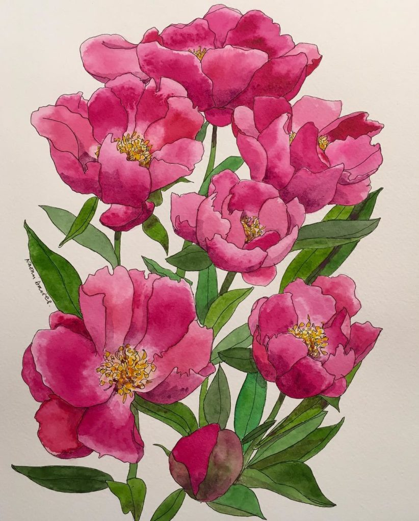 Im in a peony mood! Latest pen and watercolour Drawnhellip