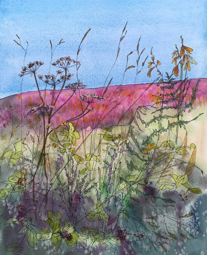 Snowdonia hedgerow cowparsley watercolor watercolour cambridgecreativetreasures nature artistsofinstagram