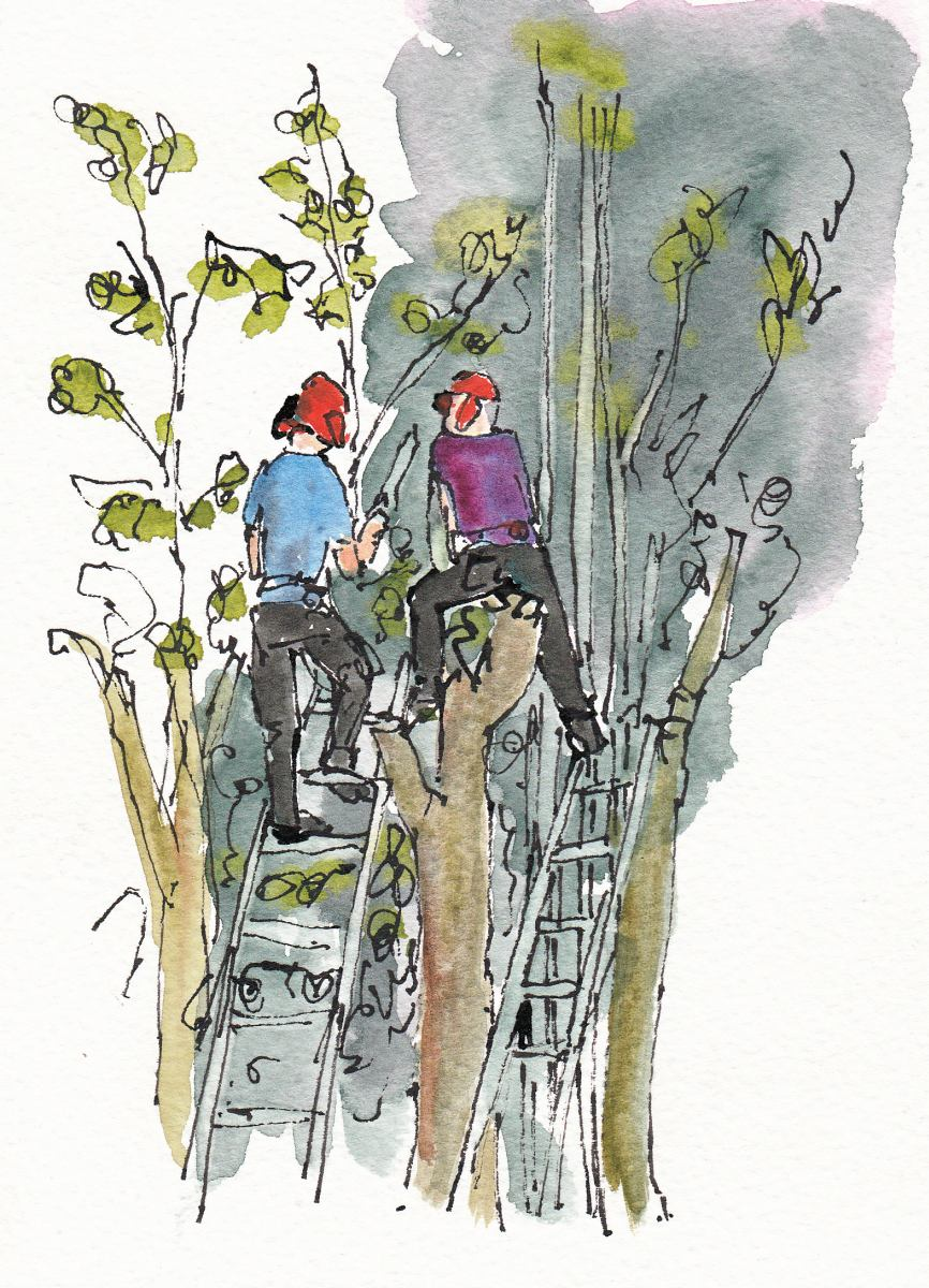 watercolour - people cutting tree